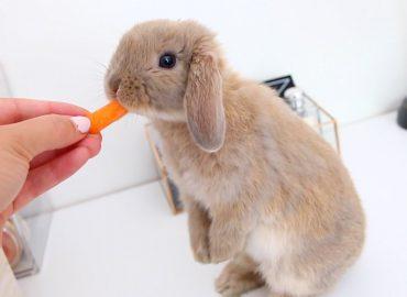 Piccoli conigli crescono