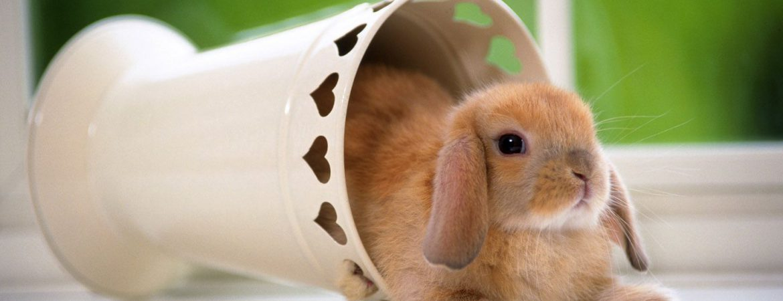 La casa del coniglio